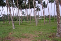 Пальмы на Ланке